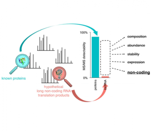 Biases in proteomics data do not explain observed absence of lncRNA translation products