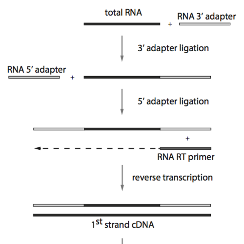 Schematic overview of the TruSeq small RNA library preparation protocol