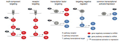 Mechanistic models of miRNA-directed gene expression regulation